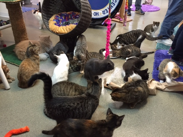 Friends of Felines' Rescue Center